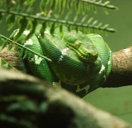 Bronx Zoo: great snake exhibit