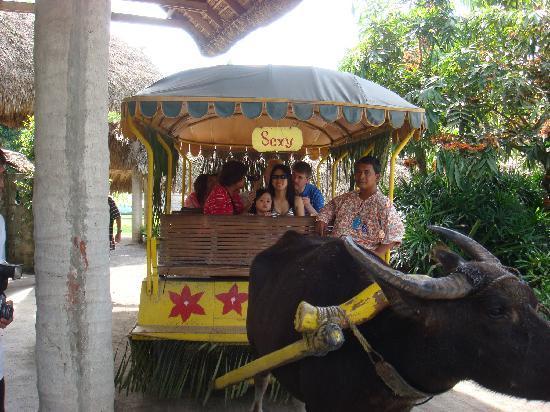 Villa Escudero Resort: Be serenaded while on a carabao cart