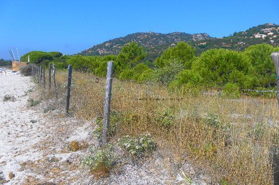 Plage de Palombaggia: la delimitazione della macchia verso la spiaggia