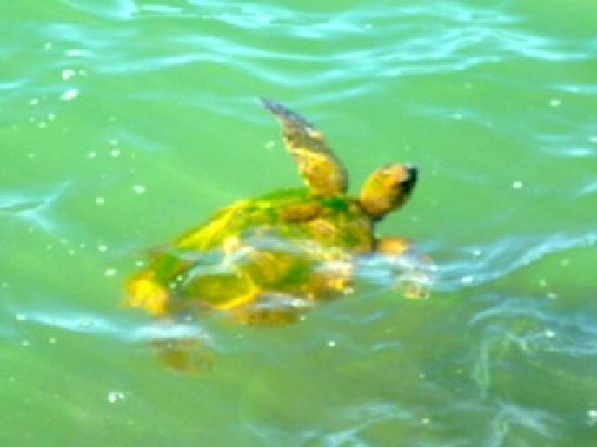Civic Guest House Backpackers Hostel: Sea Turtle