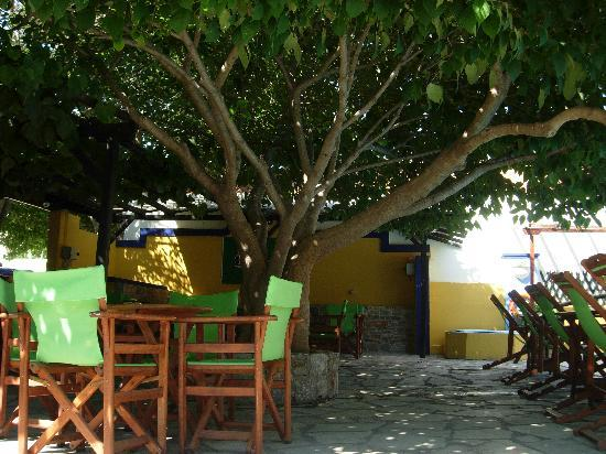 Ionia Hotel Skopelos: al fresco sotto gli alberi-bordo piscina