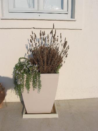 Oia Suites: fiori secchi sotto la finestra