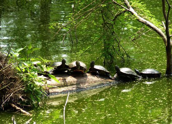 Big Thicket National Preserve, Botanical Gardens & Shangri La Nature ...