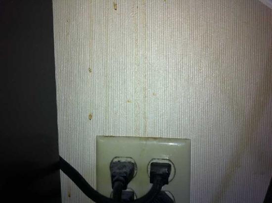 Holiday Inn Express At JFK: Das hier ist einfach nur eklig! Das muss echt nicht sein! Einfach eine Schande...