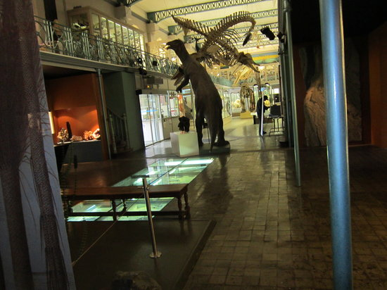 Musee d'Histoire Naturelle de Lille : view of the galleries