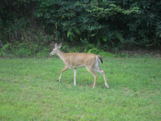The Inn at Elk River: Wildlife!