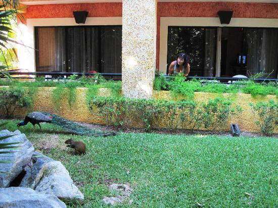 Iberostar Quetzal Playacar: Animals near our room