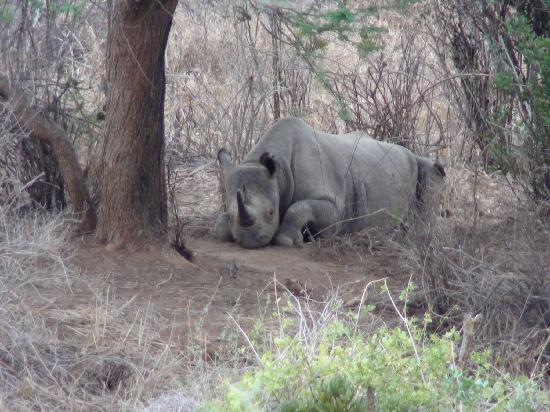 African Memorable Safaris: Rhino