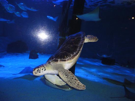 Mystic Aquarium: turtle