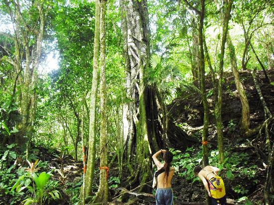 Cabinas Punta Uva: caribe sur