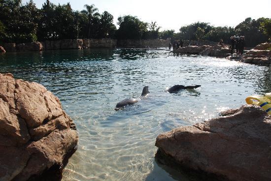 ดิสคัฟเวอรี โคฟ: Dolphin swimming up to us at end of day