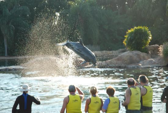 ดิสคัฟเวอรี โคฟ: Visitors with their dolphin
