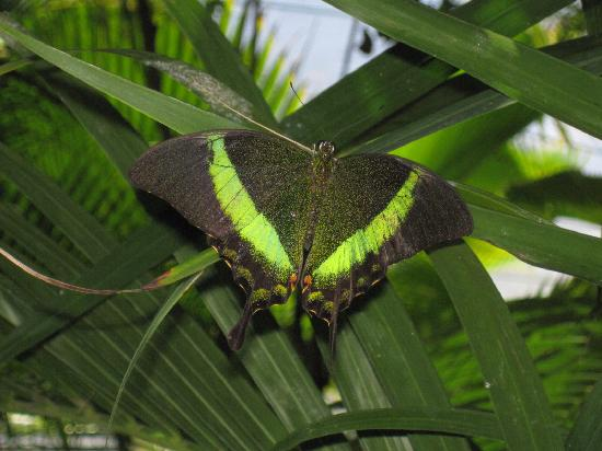 Grand Case Beach Club: Ferme aux papillons