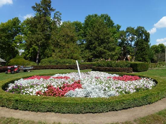 Lakeside Park & Rose Garden : Lovely bed of begonias