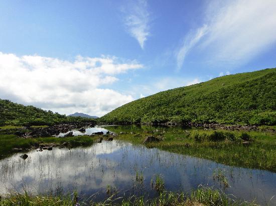 Niseko natureguide Forestrek - Day Tours: シャクナゲ沼