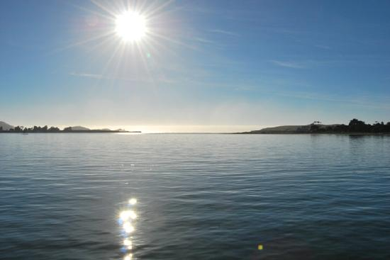 Pounawea Grove Motels - The Catlins: Views from our property