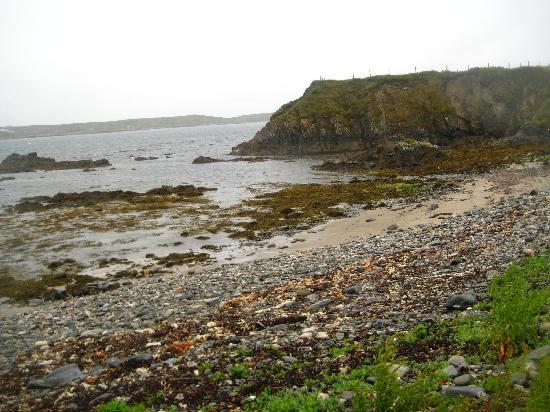 Dolphin Beach House: Beach View