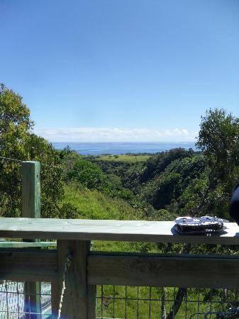 Skyline Eco Adventures - Akaka Falls: Gulch
