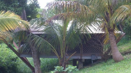 Mount Victory Camp: Coconut palms provide plenty of shade