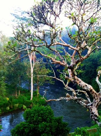 Villa Semana: amazing Ayung river