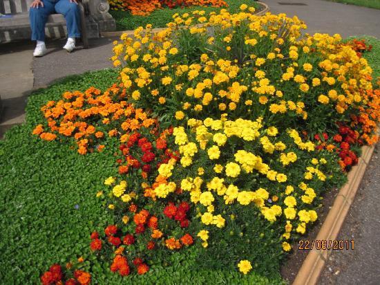 Royal Botanic Gardens, Kew: Flower bed - Kew Gardens