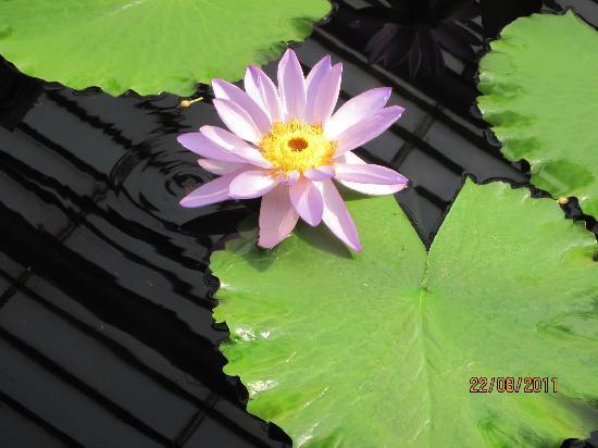 Royal Botanic Gardens, Kew: Lilies