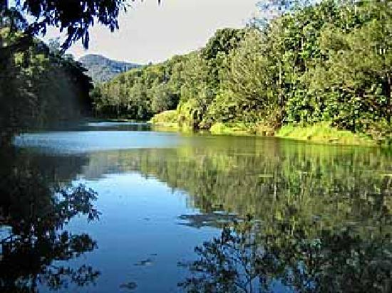 Mt Warning Bed and Breakfast Retreat: Our River Frontage