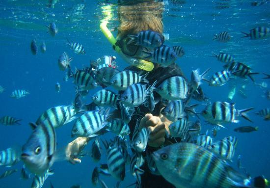 Laguna Redang Island Resort: looks at the fishes