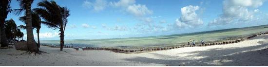 Jacaranda Beach Resort: spiaggia fronte jacaranda!
