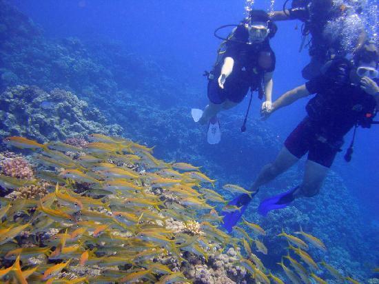 Safir Hotel Hurghada : Diving