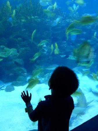 Aquaria KLCC: My boy spellbound!