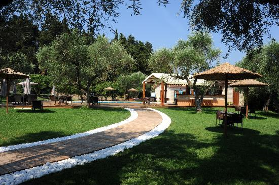 "Olive Grove Estate ""Eleas Gi"": bar"