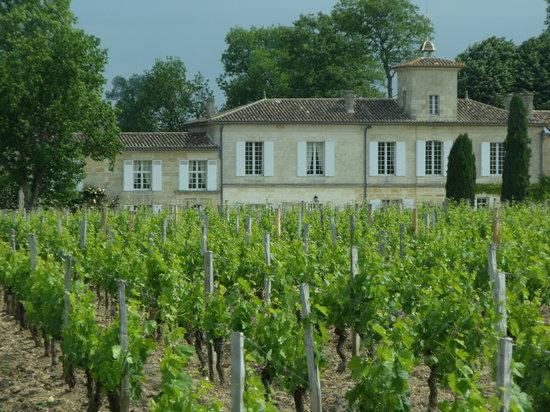 Bordeaux Wine Trails : Vignoble bordelais