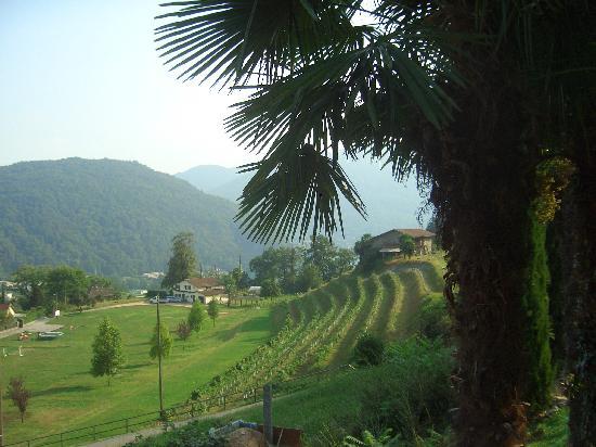 Hotel Paladina : Blick über das Gelände