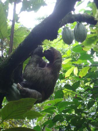 Tierra de Suenos Lodge: sloth outside our Casita!