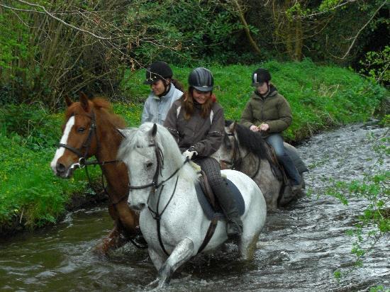 The Rock Equestrian Farm Bed & Breakfast : Water jump