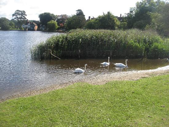 Mill House B&B: Swans in the village