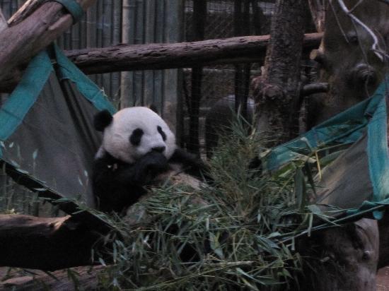 Balboa Park: Panda