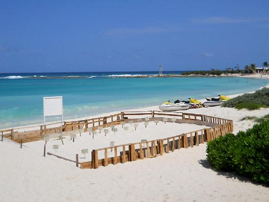 The Westin Resort & Spa, Cancun: Protective Turtle reserve