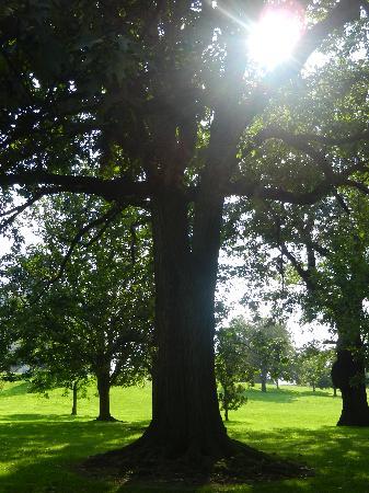 Bushnell Park: trees