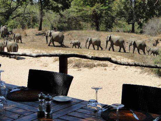Lion Sands River Lodge: Elephants from the dining deck