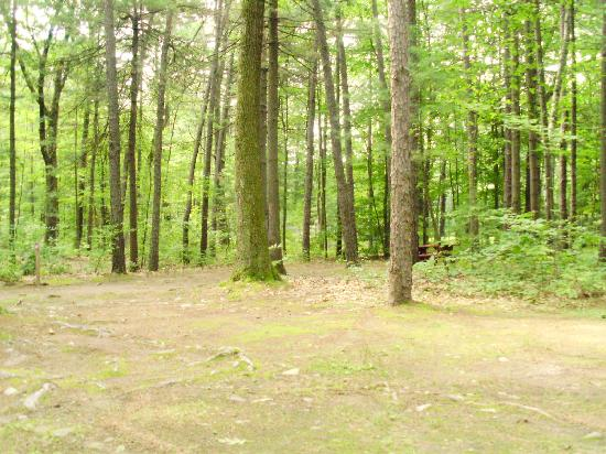 Lake George Campsites: Just beyond those trees is the I-87