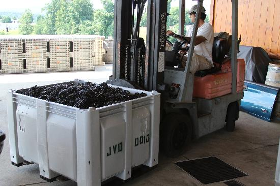 Mount Airy, NC: A bin Tempranillo grapes on the loading dock at Round Peak Vineyards, Mt. Airy, NC.