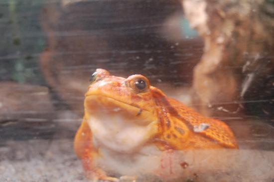 John Ball Zoo: Frog
