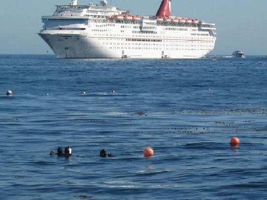 Diving Catalina: diving off Casino Point