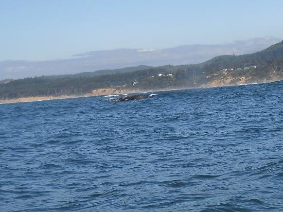 Whale Research EcoExcursions: our whale sighting