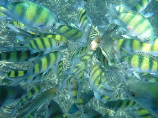 ภูเก็ต เซล ทัวร์: Snorkelling !was amazing
