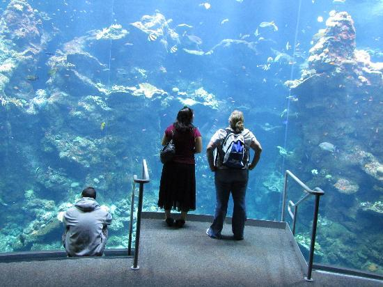 California Academy of Sciences: The Coral Reef