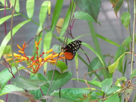 California Academy of Sciences: Butterflies in the Rain Forest