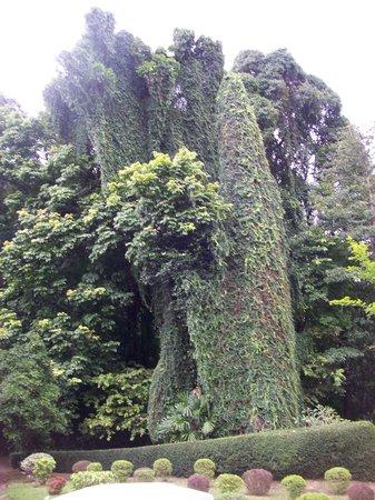 Peradeniya, Sri Lanka: alberi